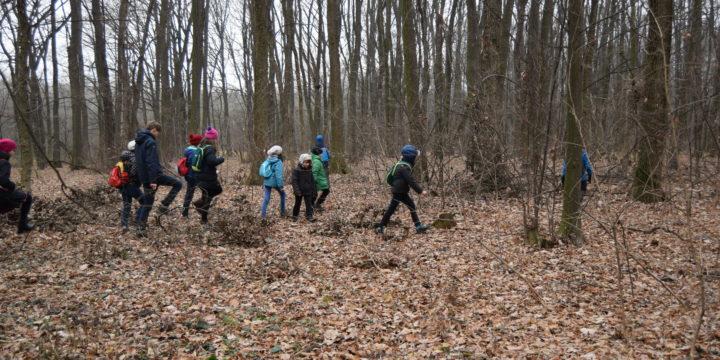 Vânătoare de comori în pădurea de la Iepurești (Giurgiu) – partea 2