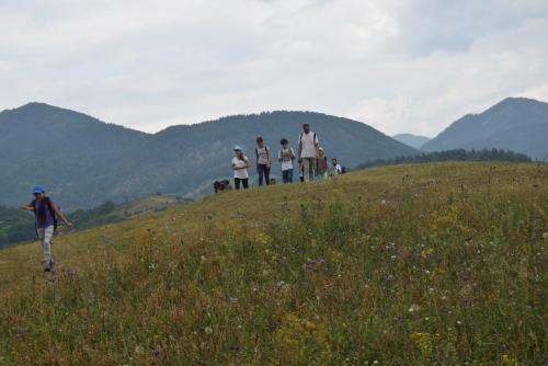 Cetasii in nordul Buzaului